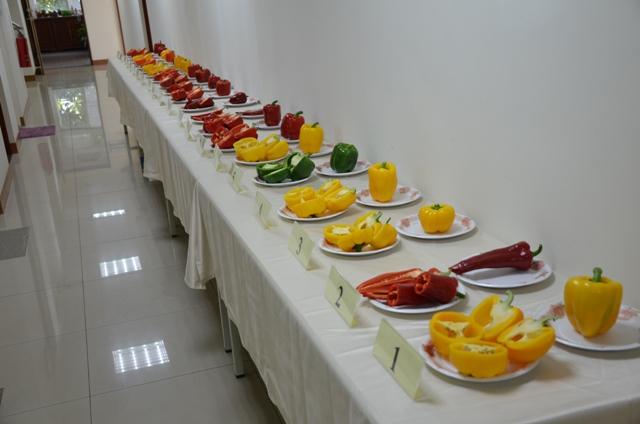 圖2、彩椒品種比賽果實展示。