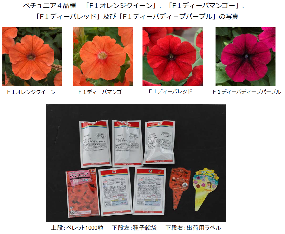 Fig2. Ministry of Agriculture, Forestry and Fisheries (Japan) announced the recall of genetically modified petunia bred by Takii seed company. Based on the investigation report of USDA,  Three structures characters, CaMV35S promoter, Nos promoter and Nos-P-NptII   were used as the detection targets to establish the detection method of  genetically modified petunia.